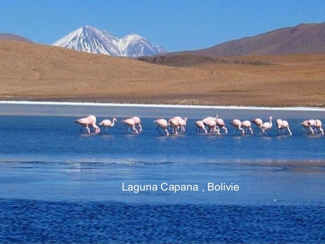 Laguna Capana , Bolivie