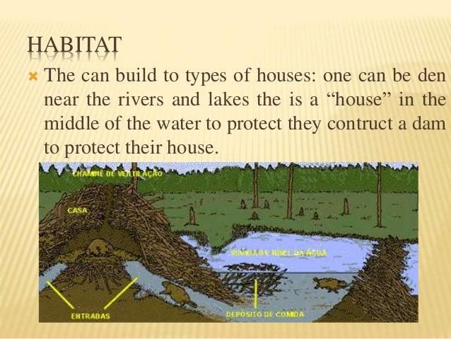 Beaver it 39 s characteristics for A frame house characteristics