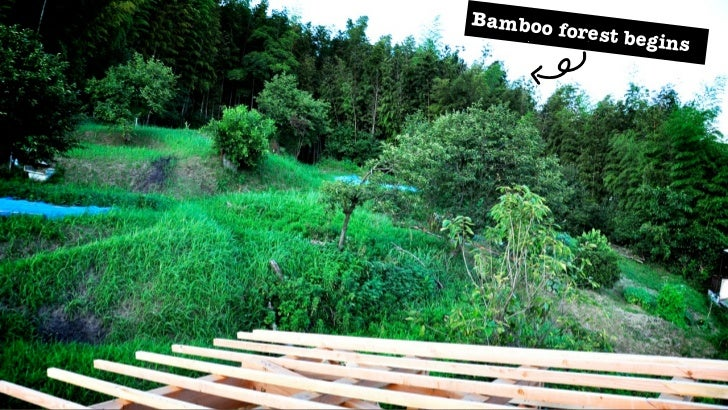 10   Lessons from     the Bamboo