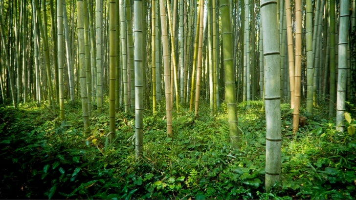 9   Lessons from    the Bamboo