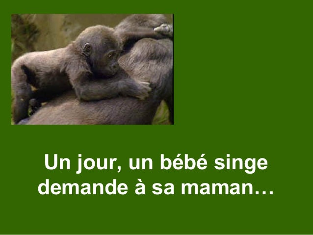 Un jour, un bébé singe demande à sa maman…