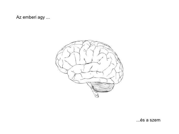 Az emberi agy ...  ...és a szem