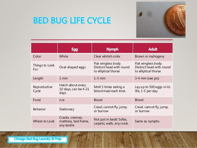 Bed bugs identification and easier extermination for Average lifespan of a mattress