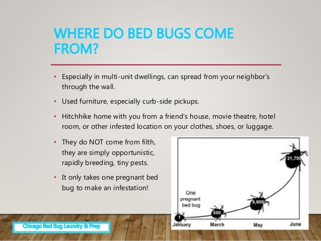 Bed Bugs Identification and Easier Extermination