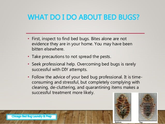 Overcoming Fear Of Bed Bugs