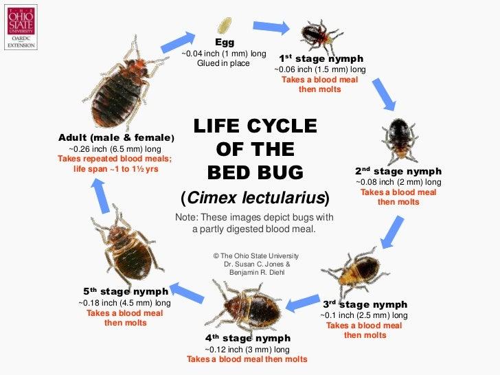 bedbug101slideshow