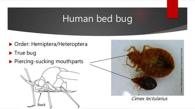 NCompass Live: Bed Bug Biology Slide 3