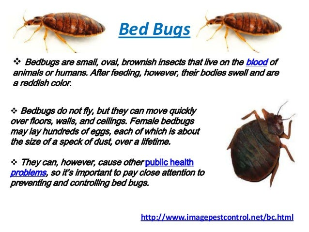 Bed Bugs  Bedbugs are small. Bed Bugs Control Bangalore