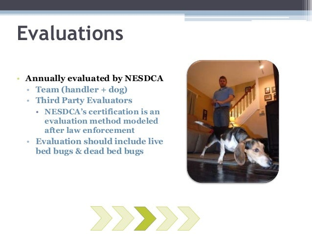 Bed Bug Detection Dog Certification