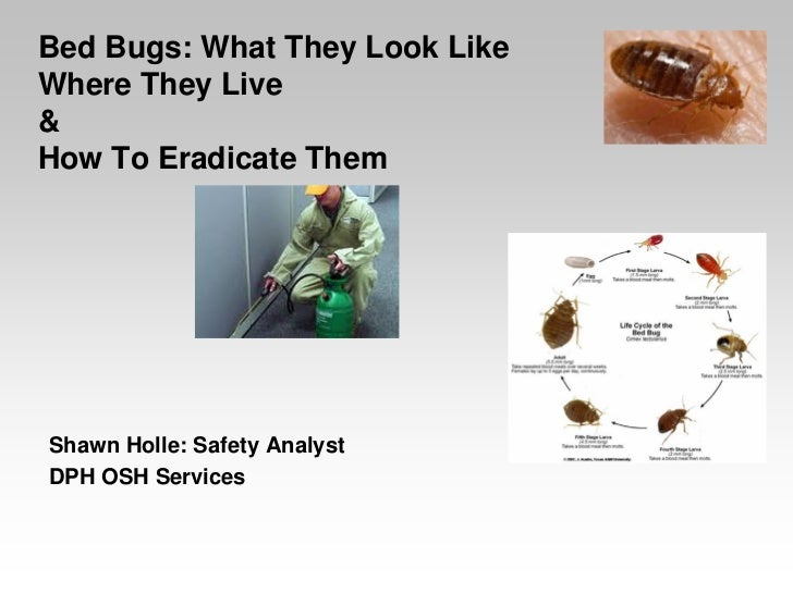 Bed Bugs: What They Look LikeWhere They Live&How To Eradicate ThemShawn Holle: Safety AnalystDPH OSH Services