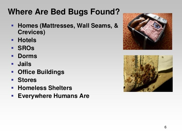 Bed Bugs In Homeless Shelters