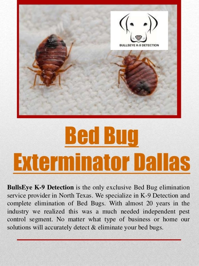 Bed Bug Exterminator Dallas BullsEye K 9 Detection Is The Only Exclusive Bed  Bug Elimination ...