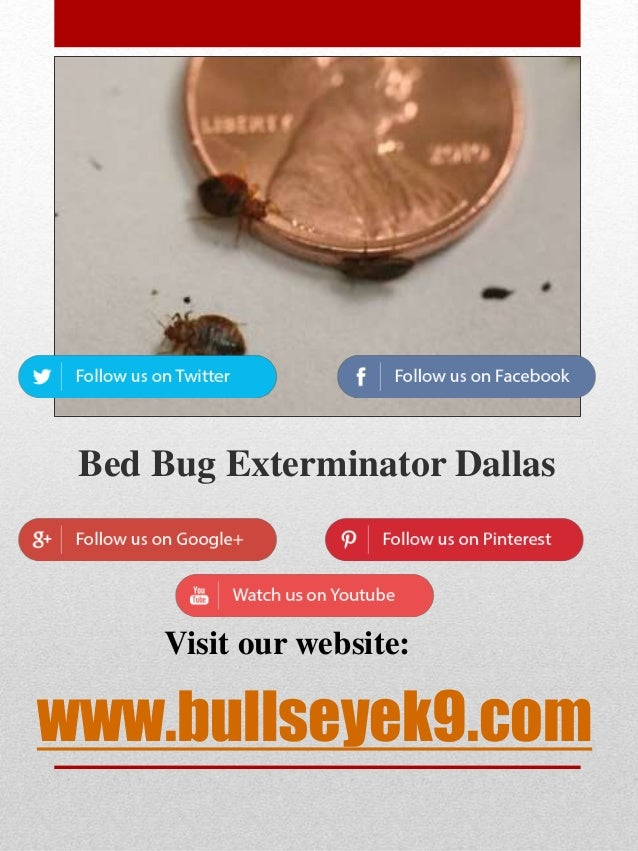 Professional Bed Bug Exterminator Near Me