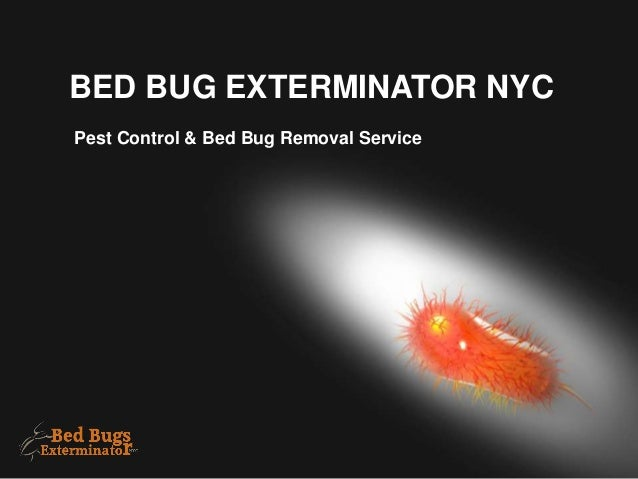 Bed Bug Exterminators Nyc