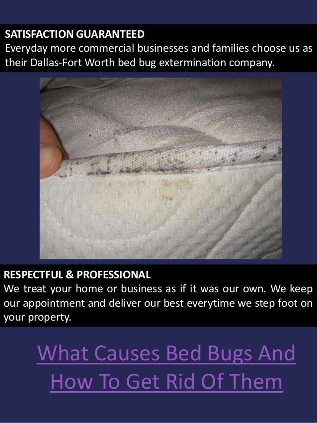 Bed Bug Removal Near Me
