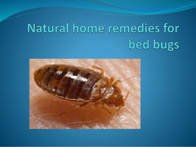natural home remedies for bed bugsbed bug is the common problem for every gardener to rid of this problem,