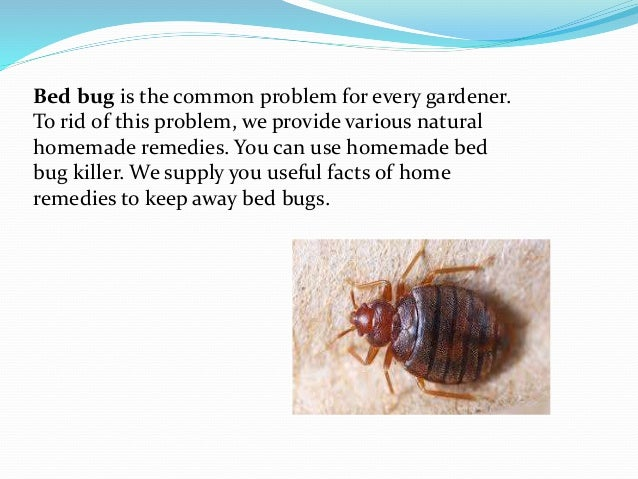 Natural Home Remedies For Bed Bugs