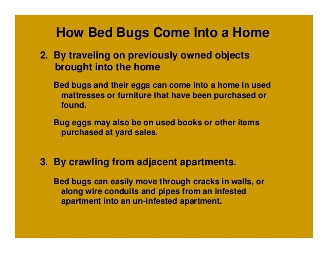 Can Bed Bugs Travel Through Apartment Walls