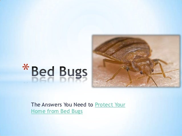 *    The Answers You Need to Protect Your    Home from Bed Bugs
