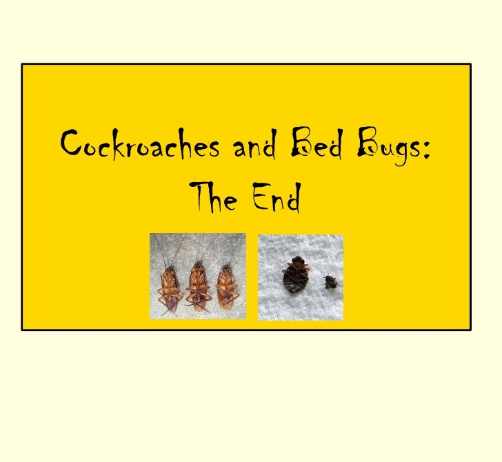 Bedbugs And Cockroaches