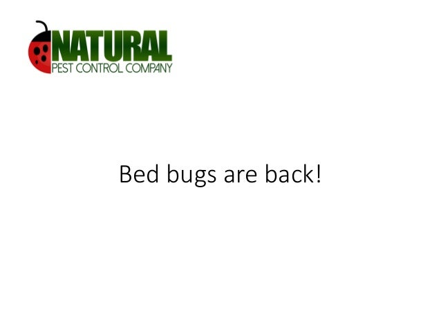 Bed bugs are back!