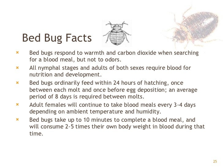 Facts About Bed Bugs 28 Images Bed Bug Facts And Pictures Bangdodo Bed Bug Identification