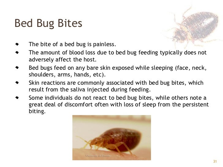 Bed Bugs Official Website