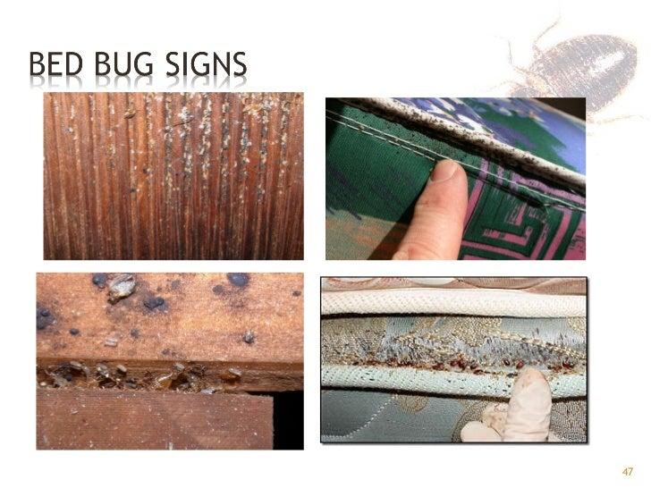 Bed Bugs Gpha