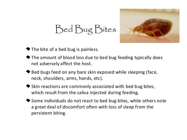 Can Bed Bugs Transmit Hiv Virus
