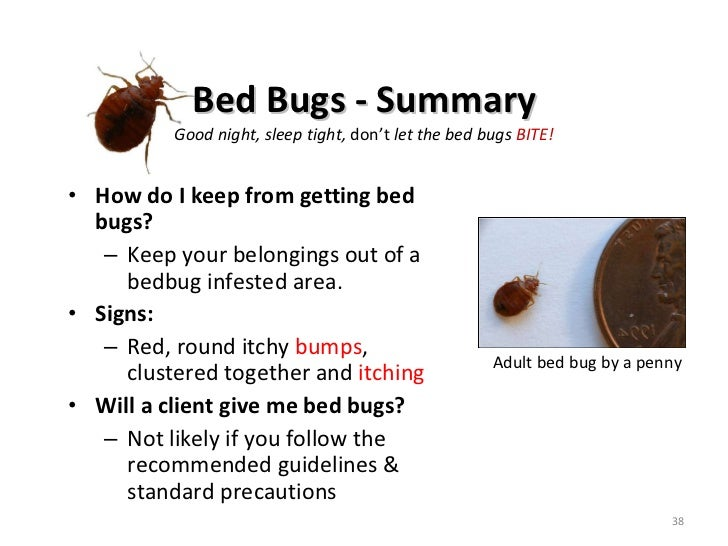 Pco Treatment Bed Bugs