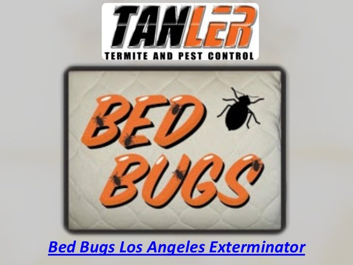 Bed Bugs Los Angeles Exterminator