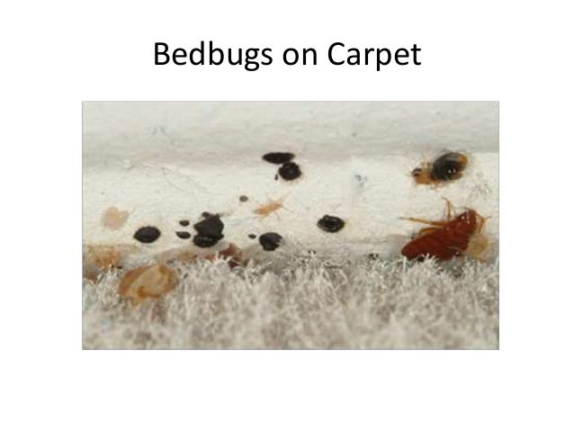 Bed Bugs In Clothing Stores