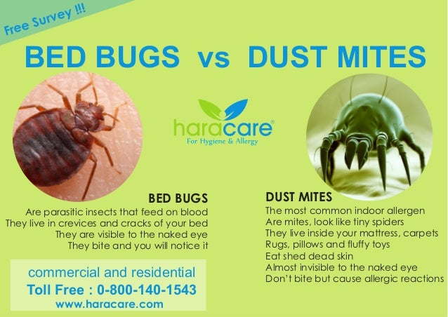 Bed Bugs Vs Dust Mite