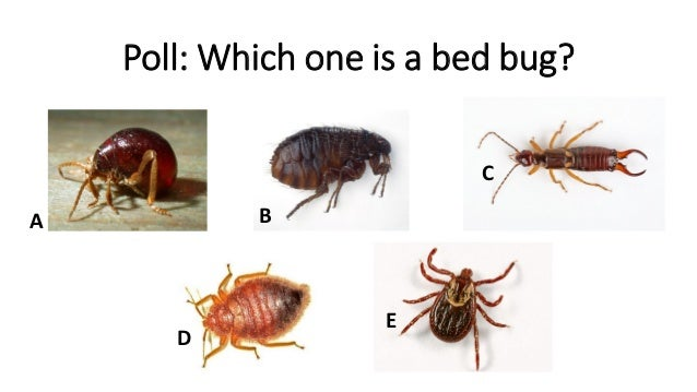 Poll: Which One Is A Bed Bug?