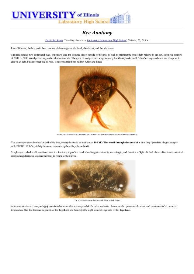 Bee Anatomy
