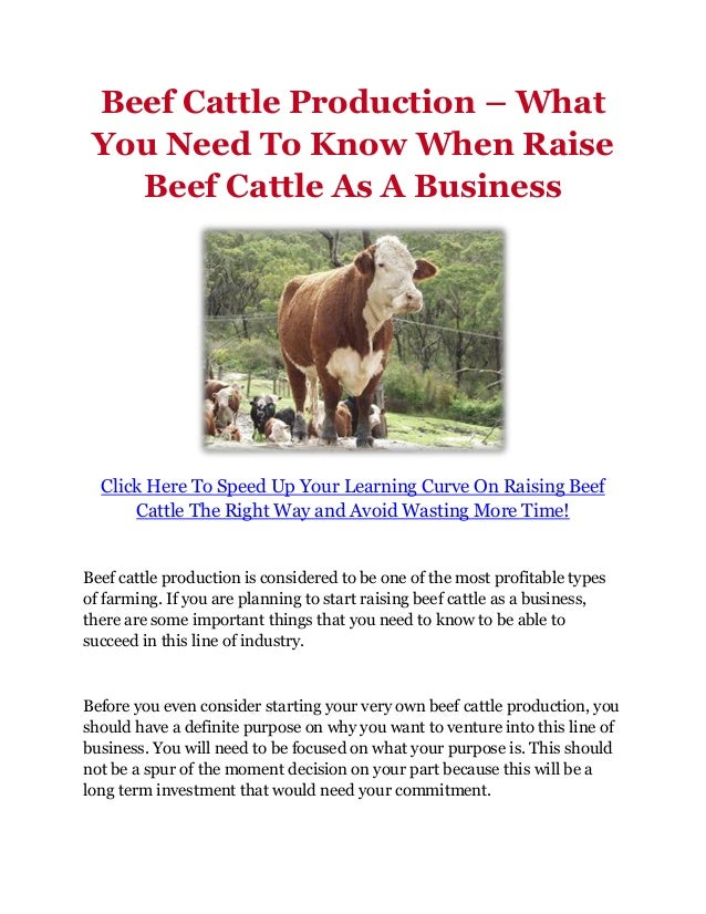 Business plan raising beef cattle best resume career objective examples