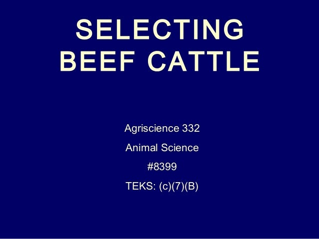 SELECTING BEEF CATTLE Agriscience 332 Animal Science #8399 TEKS: (c)(7)(B)