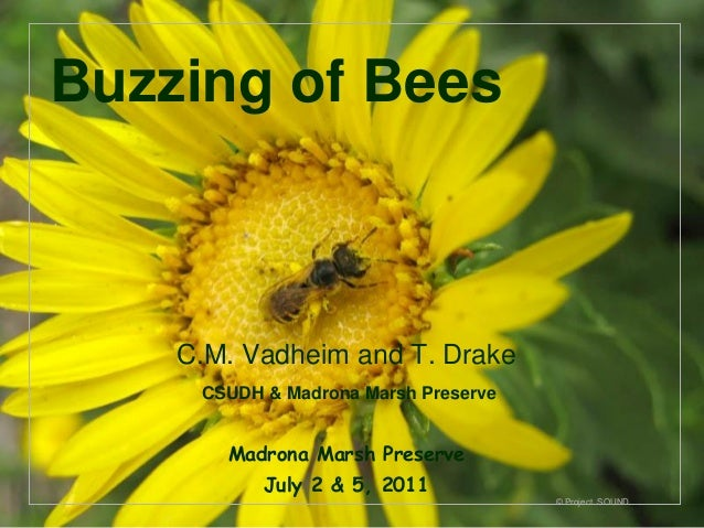 Buzzing of Bees    C.M. Vadheim and T. Drake     CSUDH & Madrona Marsh Preserve       Madrona Marsh Preserve           Jul...