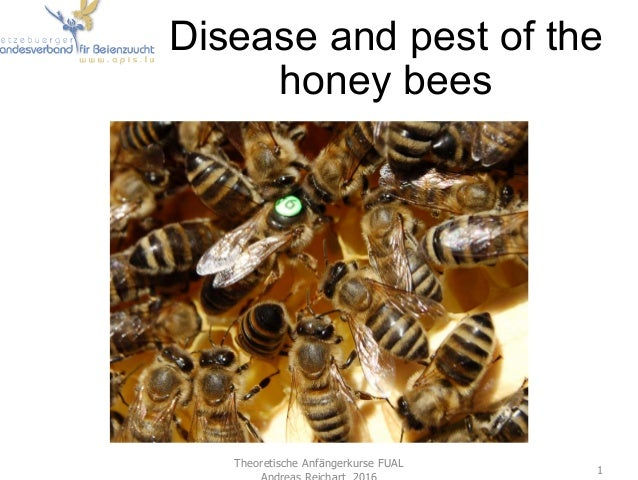 Disease and pest of the honey bees Theoretische Anfängerkurse FUAL Andreas Reichart 2016 1