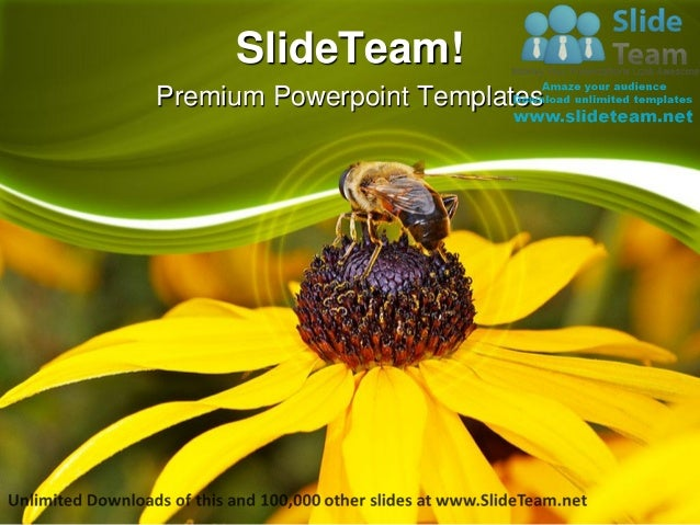 Bee On Yellow Flower Nature Power Point Templates Themes And Backgrou