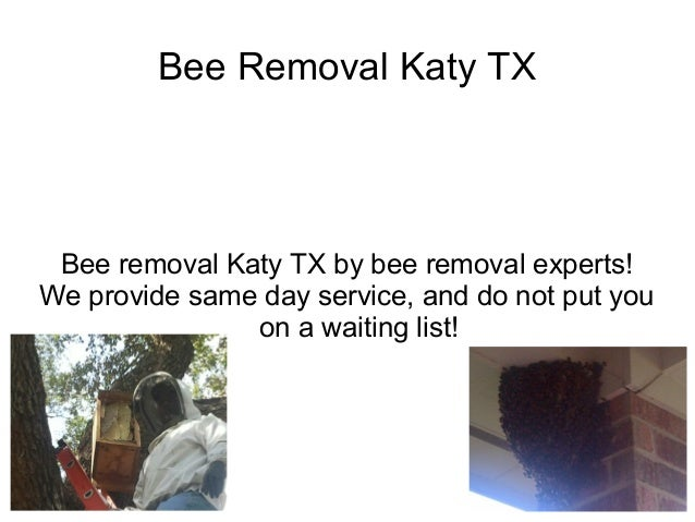Bee Removal Katy TX Bee removal Katy TX by bee removal experts!We provide same day service, and do not put you            ...