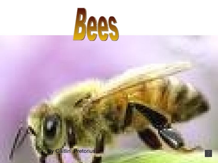 Bees by By Caitlin  Pretorius