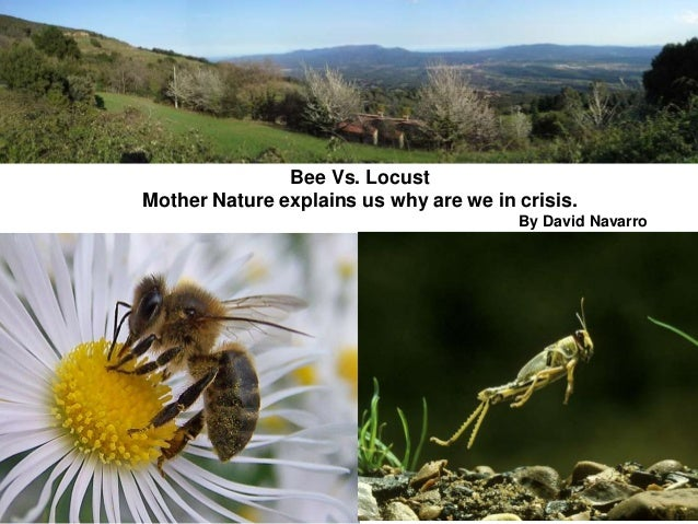 Bee Vs. Locust Mother Nature explains us why are we in crisis. By David Navarro