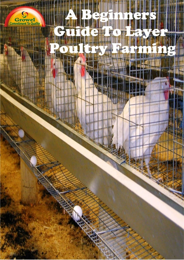 Beginners Guide To Layer Poultry Farming