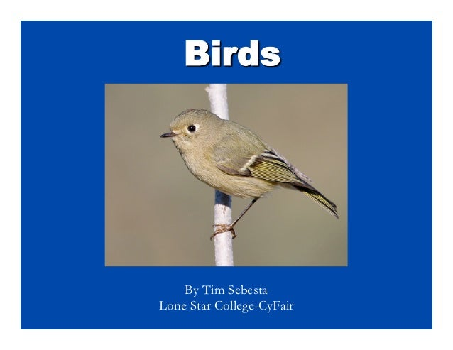 Birds	     By Tim SebestaLone Star College-CyFair