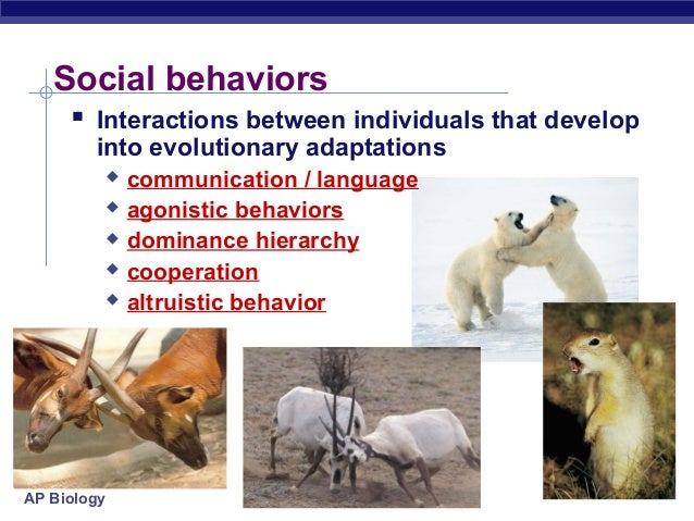 social behaviors The genes in this area of the brain, some of which have been implicated in  human social behaviors, play a role in the ability of these fish to be.