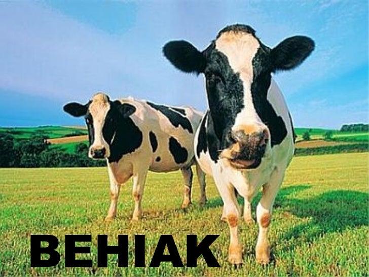 BEHIAK