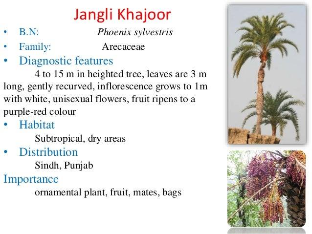 Native Plants of Pakistan
