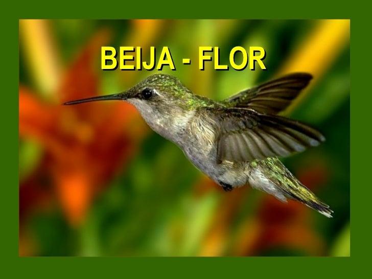 BEIJA - FLOR