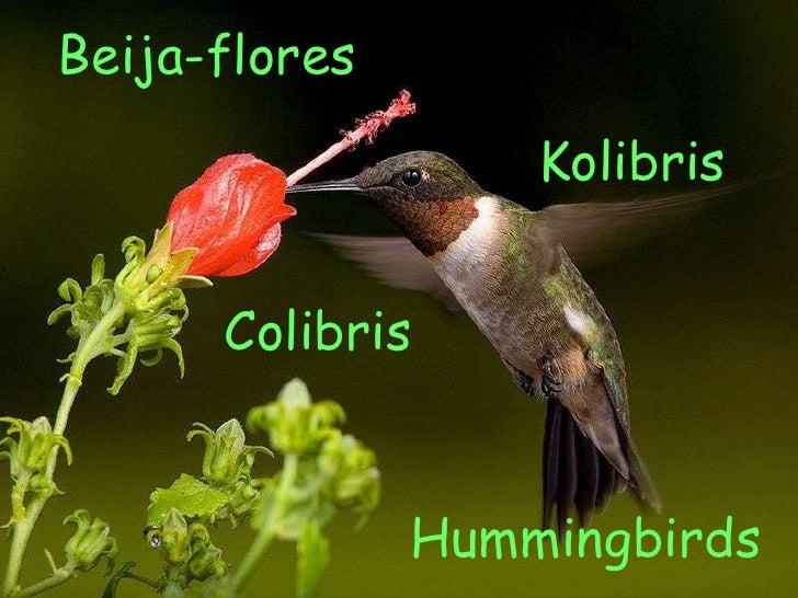 Hummingbirds Beija-flores Kolibris Colibris